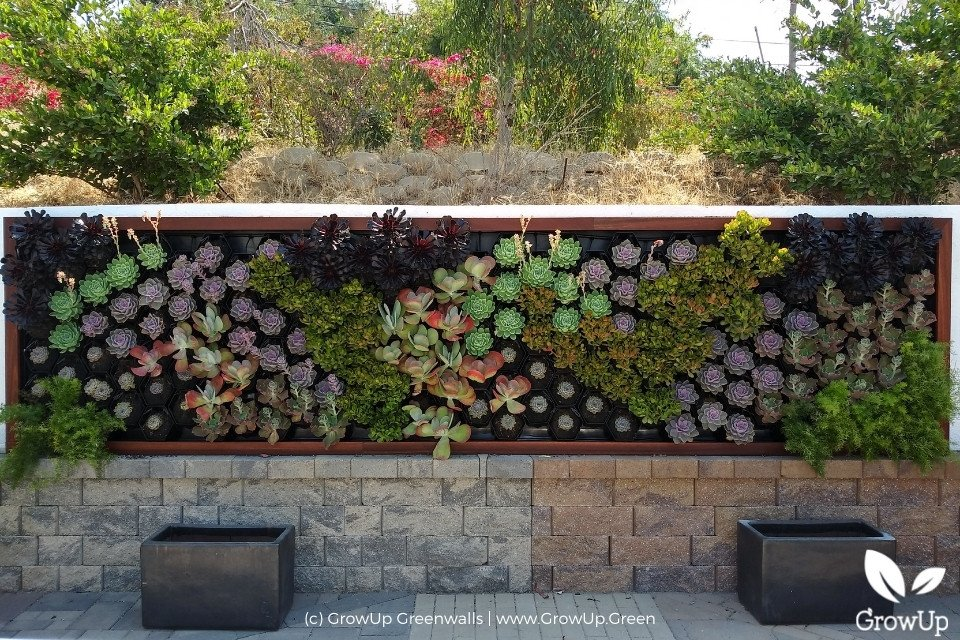 colorful succulent wall in a yard