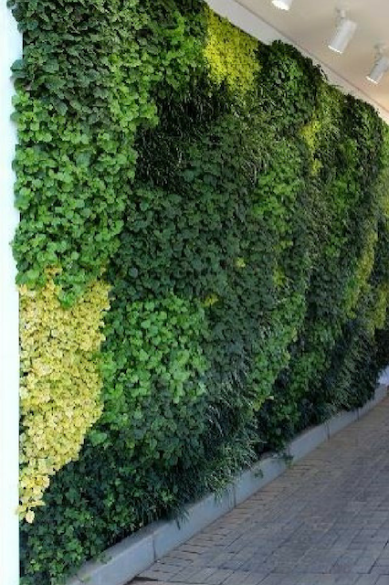 A close-up of a large greenwall
