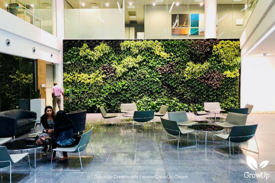A large greenwall as a backdrop to a collaborative office space