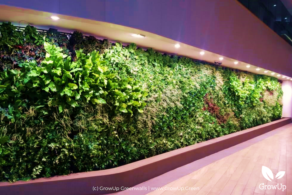 A large greenwall stretching across a wall