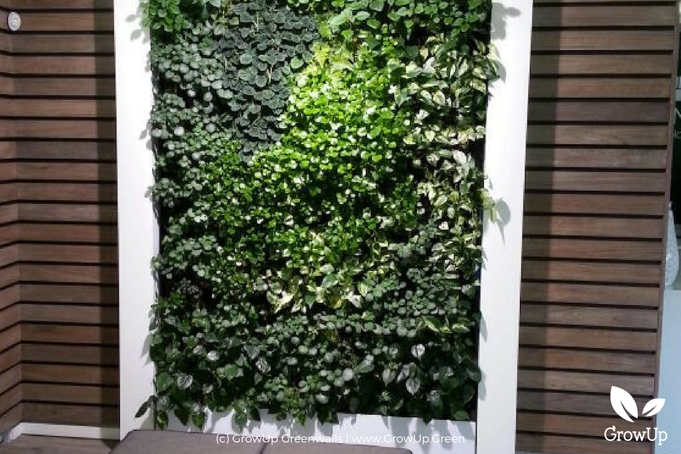 a greenwall indoors with light shining on it