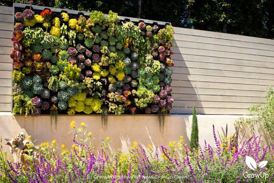 Flourishing succulent wall in a backyard with a garden