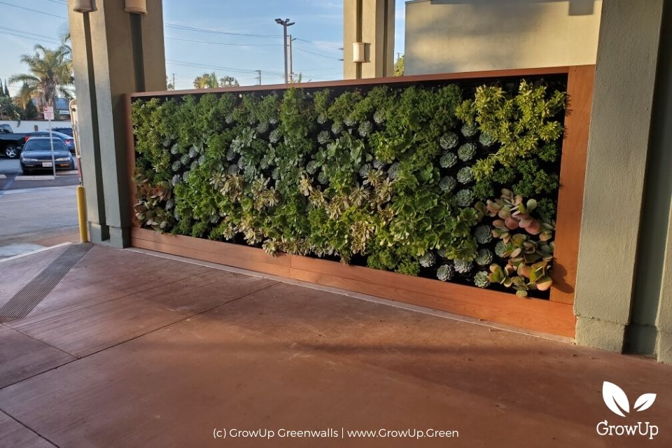 A succulent greenwall outdoor a professional business