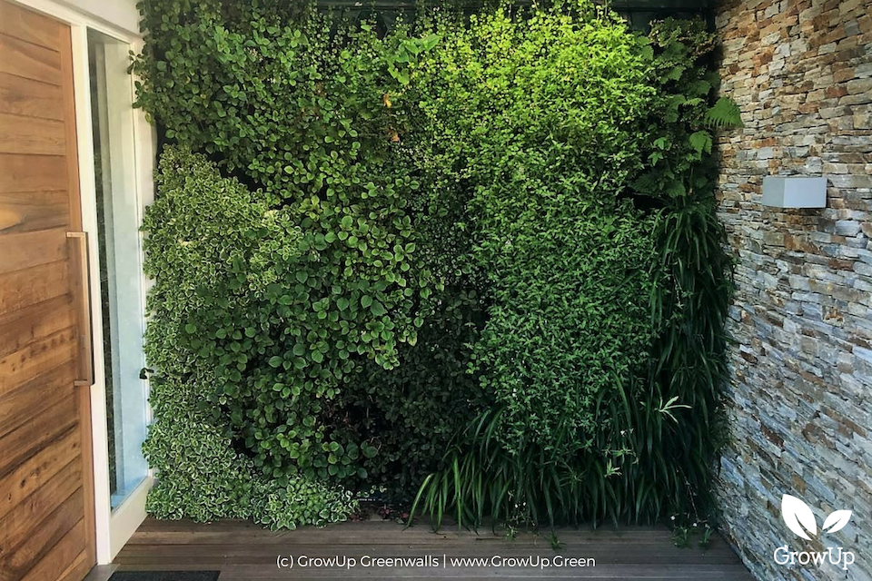 A large greenwall in a backyard