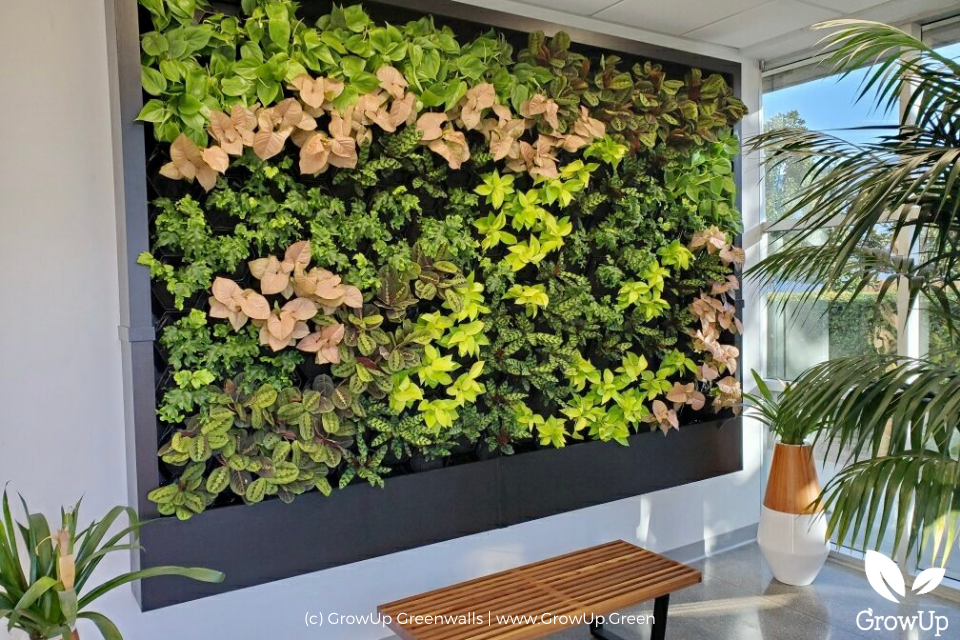 A greenwall with green and pink colors in an office setting.