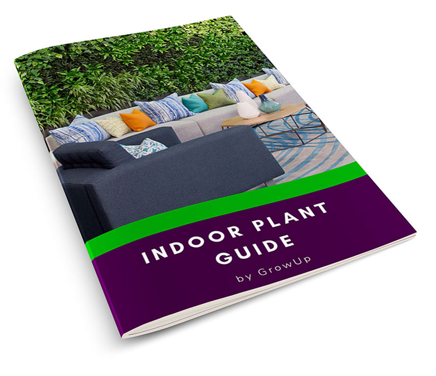 Indoor-Plant-Guide