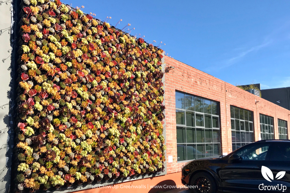 A large succulent wall on the side of a commercial building