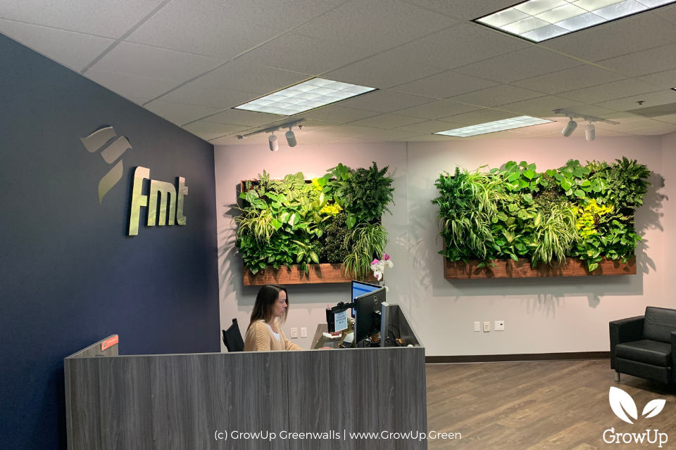 Two greenwalls in an office setting.