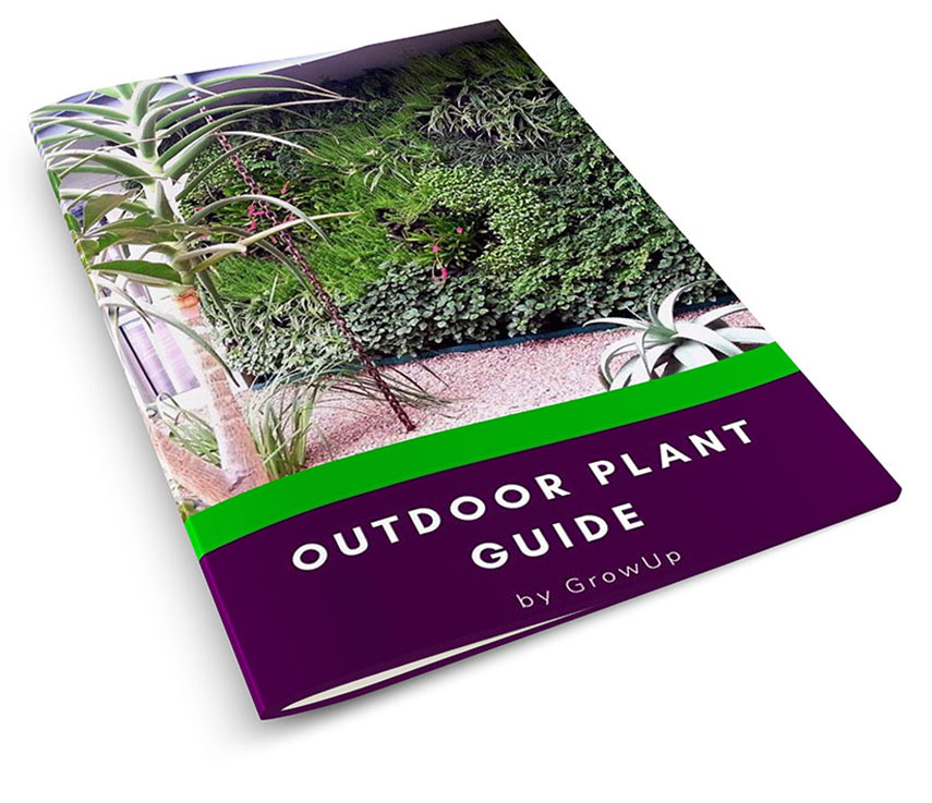 Outdoor-Plant-Guide