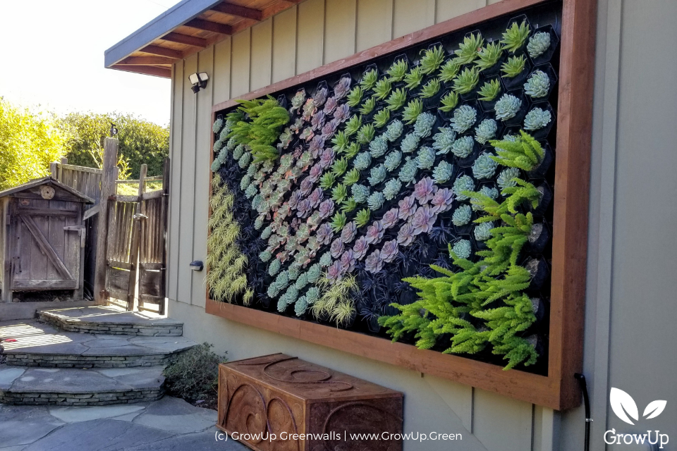 A succulent wall on the front of a house in San Francisco, CA