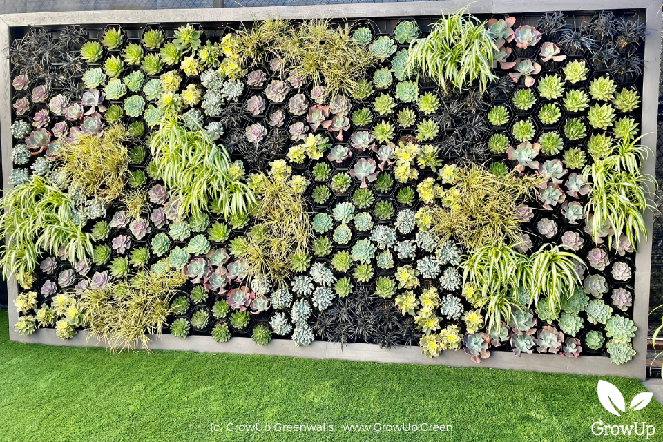 A succulent wall with colors of green, yellow, purple, and black.