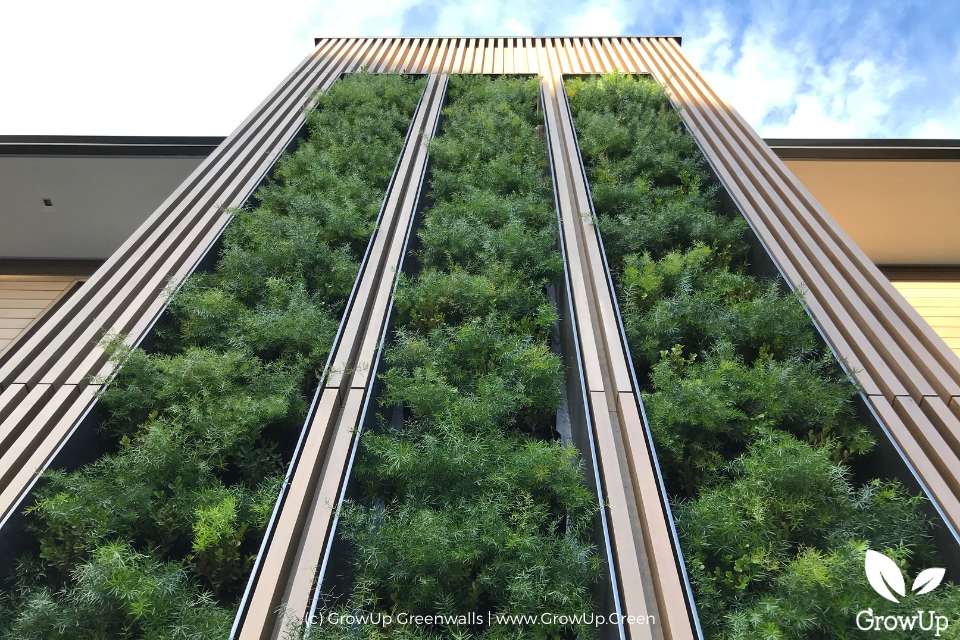 A large greenwall scaling up the side of a house in Los Angeles, CA