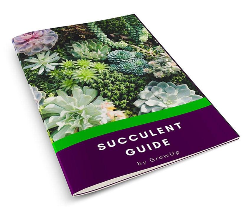Succulent-Guide