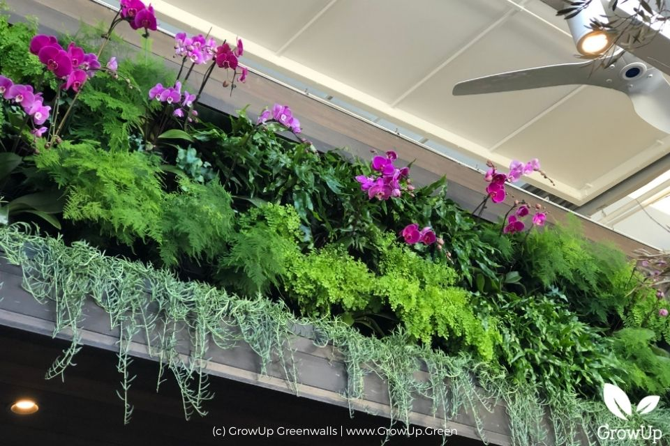 Orchid greenwall above doors in a restaurant.