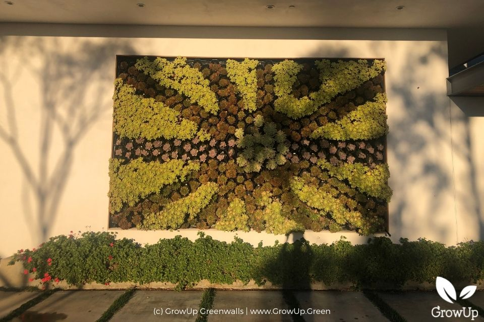 Succulent wall with plants in a start pattern.
