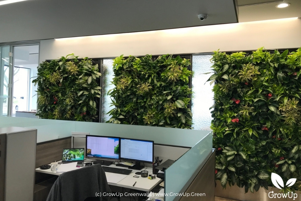 three greenwalls above office cubicles