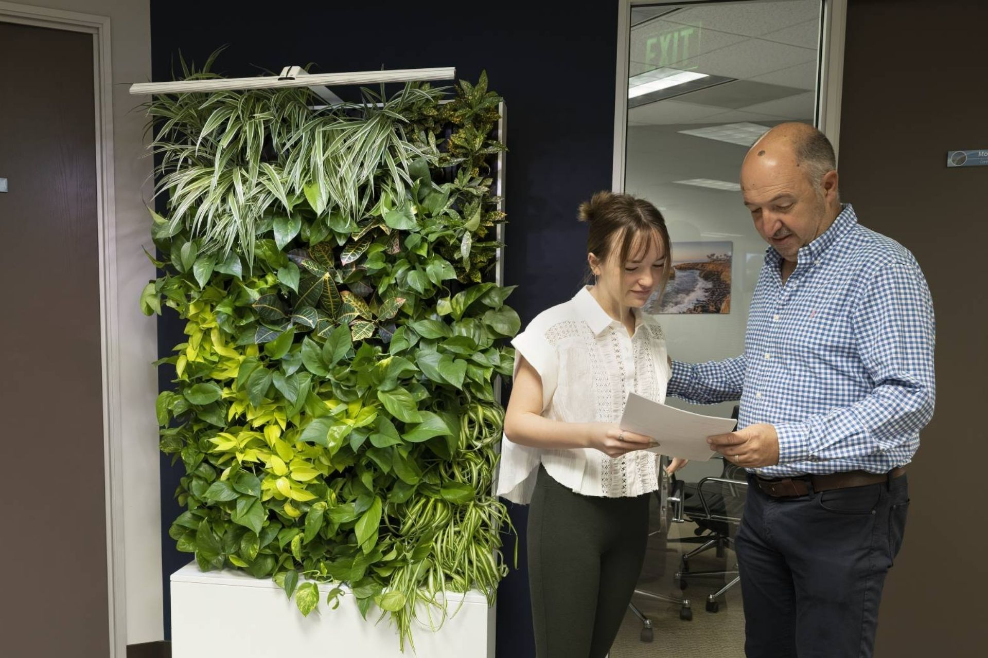 coworkers discussing work in front of mobile divider greenwall